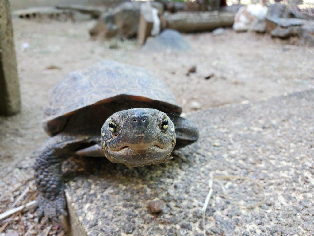 時期 亀 冬眠 野生の亀は冬眠するの?